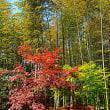 『初夏の色』 竹林