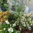 5月の寄せ植え工房「小春日和」始まりました!
