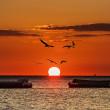 綺麗な夕陽が明石海峡に沈む