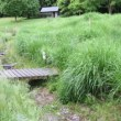 ススキ、 県立三木山森林公園