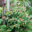 大海戸の庭 6月の花