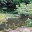 アケボノソウを見に・(2)