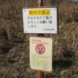 埼玉県川島町の白鳥 2017年12月16日