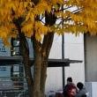紅葉の奥茨城へは