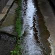 雨になった祭り 2