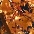 泉自然公園の紅葉 その1