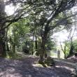 本屋親父のつぶやき 8月20日 緑に囲まれた春日神社境内を撮りました。