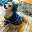 リメイク犬服②