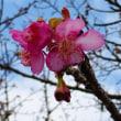 冬の138タワーパークと大野極楽寺公園 ・・・ 愛知県一宮市