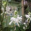 オルラヤの発芽♡那須高原に行ってきました!