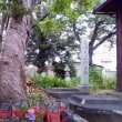 ❀ ホテイアオイの本薬師寺