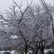 わが町南材 (8)雪の花