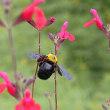 ブル-ボネットの昆虫