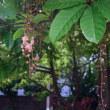 沖縄・6月のうーとーとー26日午後のすわり込み写真など35枚