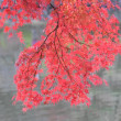紅葉とカワセミ