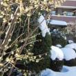 大雪警報の翌朝
