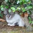 今日の猫さん。木陰にひっそりと。