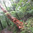 5月22日(火)花の屋久島 その3