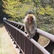 猿の威嚇に負けず撮影