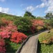 ツツジがいっぱい〜那須高原・八幡のツツジ