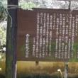 雲霞のごとし。賀名生梅林の梅(あのうばいりん・奈良県五條市西吉野町)