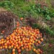 干し柿を作ろう