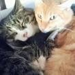 ねこコレ144 保護猫カフェおっぽ