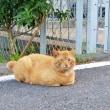 癒しのネコちゃん
