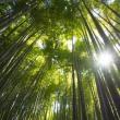 竹の寺 報国寺の朝