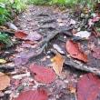 今年の紅葉早く 藻岩山