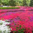 皇居東御苑 二の丸庭園ツツジが見頃でした。