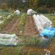 昨日もみ殻堆肥を入れた畝