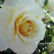薔薇の園  * 2017 *  Vol.62 * 和音~Waon *