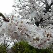 """みちのくの""""桜""""と名所を訪ねて 津軽鉄道 芦野公園 ③"""