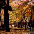 浄真寺の紅葉