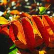 落葉の季節~最後の輝き