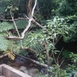 石垣島の穴場、名蔵ダムと田んぼ