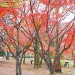 万博公園 (5)