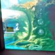 しながわ水族館にクラゲ&ウミウシを見に行きました。