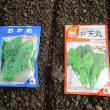 ホ―レンソー種蒔き