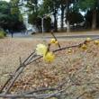 代々木公園(ロウバイ)&わんこ