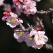 徳川園の松や牡丹やフッキソウ