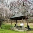 桜が咲いてたので撮ってきた。