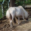 世界の馬の美術品・逸品に出会える「馬の博物館」