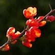冬の散歩道に咲く花