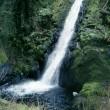 愛媛県の滝  柾木滝