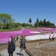 2018芝桜の丘(埼玉県秩父市)