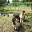 忍野へ散歩