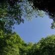 緑の帝釈峡2