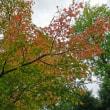 白秋を生きる人☆秋を探して《その1》